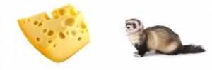 cheeseweeasel-73478_630x210